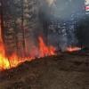 Semnal – Sute de hectare de pădure se pierd din cauza incendiilor