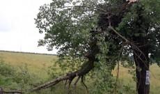 Drum judeţean din Dâmboviţa, blocat după ce o vijelie a rupt un copac