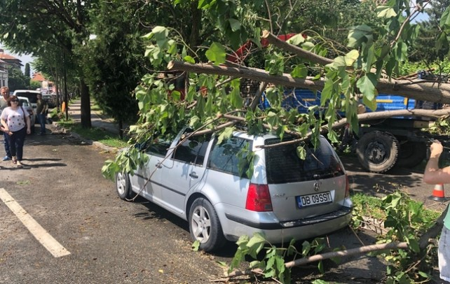 Vijelie şi ploaie torenţială în Târgovişte! Un copac s-a prăbuşit peste două maşini, lângă Parcul Chindia