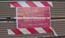Disperare printre localnicii din Lunguleţu. A apărut alt focar de pestă porcină