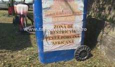 Noi focare de pestă porcină africană, în Corbii Mari, Dobra, Odobeşti şi Perşinari