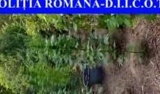 Droguri pe Valea Dâmboviţei! Ce au descoperit poliţiştii de la Crimă Organizată vizavi de o pădure din Gemenea