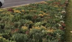 Târgovişte – Vor fi plantate peste 20 de mii de flori şi 2000 de arbori