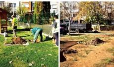O mie de arbori vor fi plantaţi în cartierele din Târgovişte