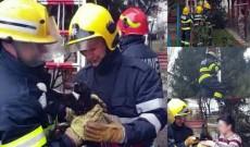 O pisicuţă blocată într-un brad a fost salvată de pompierii din Moreni