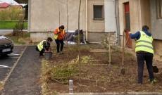 """""""Încă 1500 de arbori si arbuști și 4000 ml de gard viu, în Târgovişte"""""""