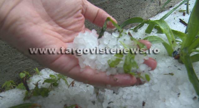 """Vremea rea s-a abătut și asupra județului Dâmbovița.  """"Recoltele noastre sunt compromise peste 80-90%"""""""