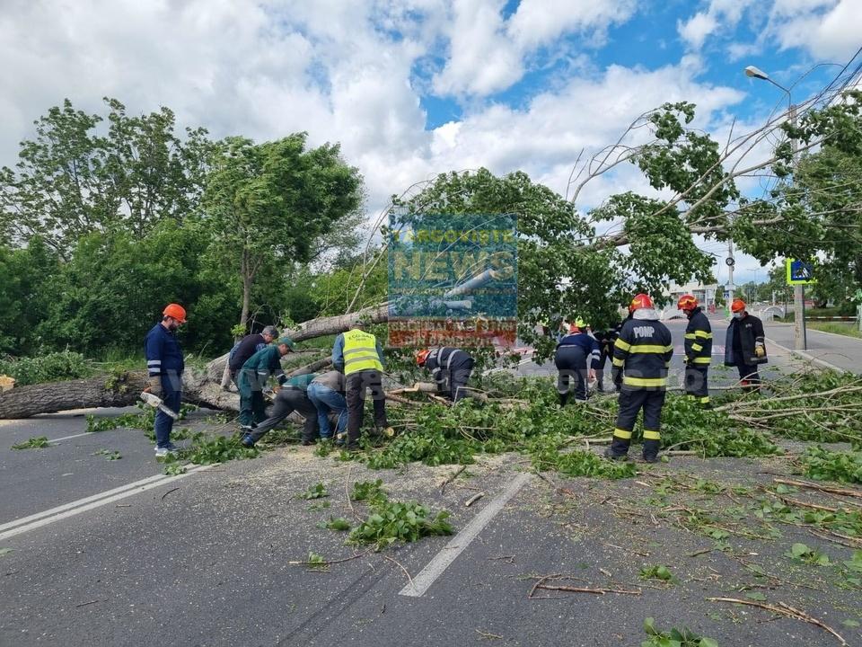 Vântul puternic a smuls mai mulţi copaci din rădăcini şi i-a aruncat peste maşini