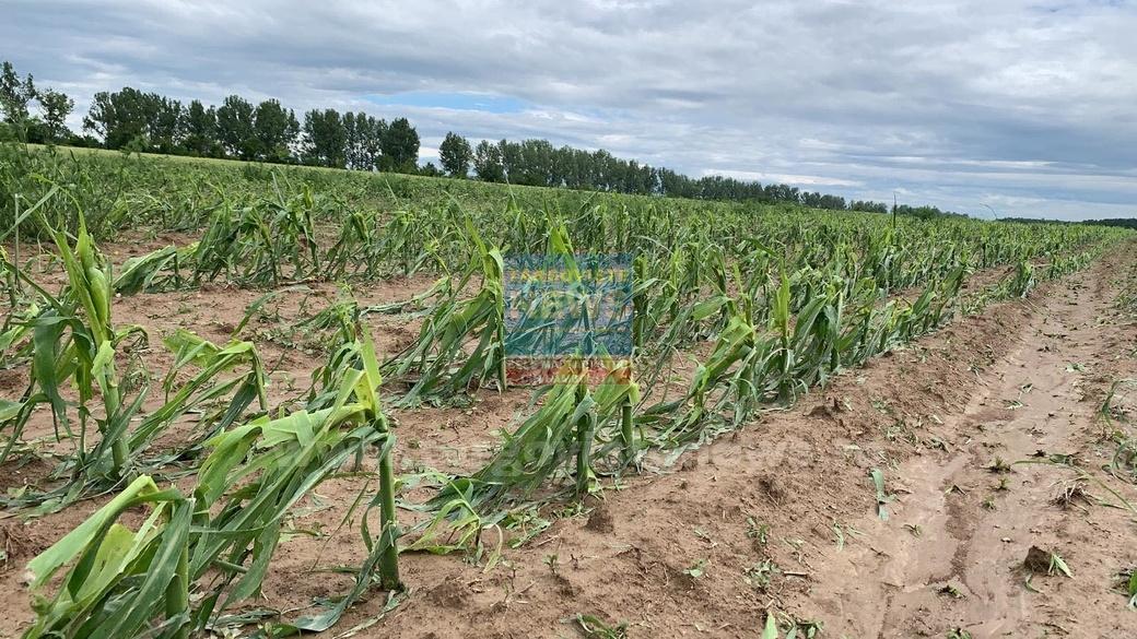 Dezastru la Răcari, din cauza grindinei. Culturile fermierilor au fost nimicite
