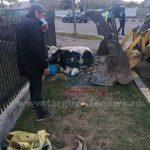 Imagini impresionante la Moreni: O vacă lovită de o mașină a fost lăsată ore în șir să agonizeze pe un trotuar